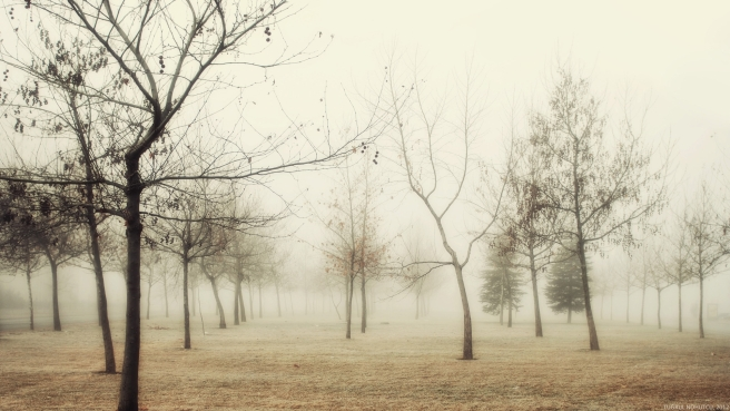 wood_autumn_trees_fog_young_growth_hoarfrost_grass_withering_morning_48358_1920x1080.jpg